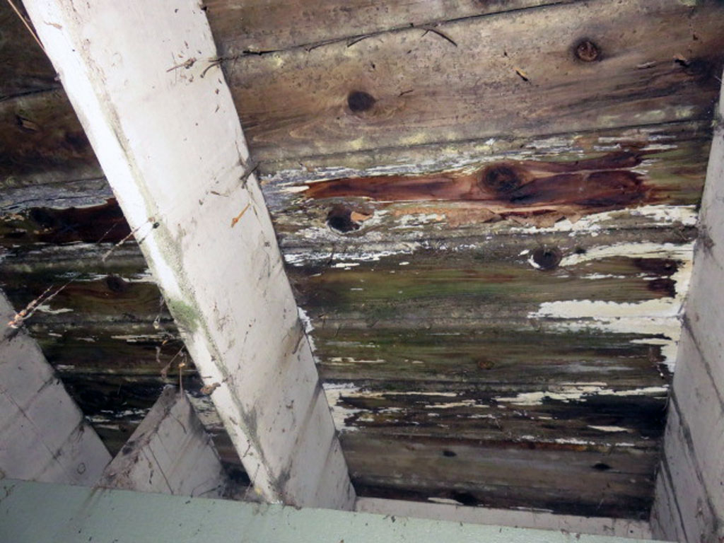 The white growth very commonly seen under decking and framing is a wood destroying organism and will cause failure of wood components